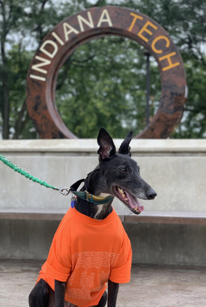 Wes, Social Media Manager's dog, posing in front of the Indiana Tech water wheel on campus